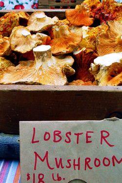 Lobstermushroom