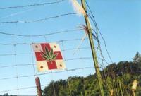 Medicalmarijuana2